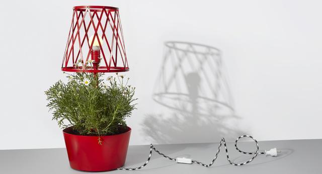 Bardzo mały ogród w małym mieszkaniu: Green Lamp