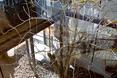 Szklana bryła hiszpańskiego domu w Pomar de Valdivia otacza drzewa