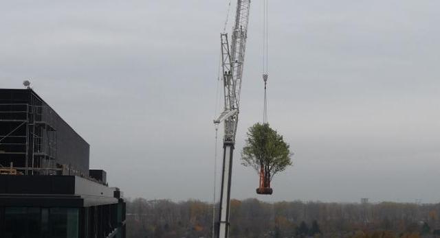 Biurowiec w Warszawie, nad nim - drzewo