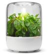 Szklana bryła KitchenGarden firmy Fiskars to miniaturowa szklarnia do uprawy ziół