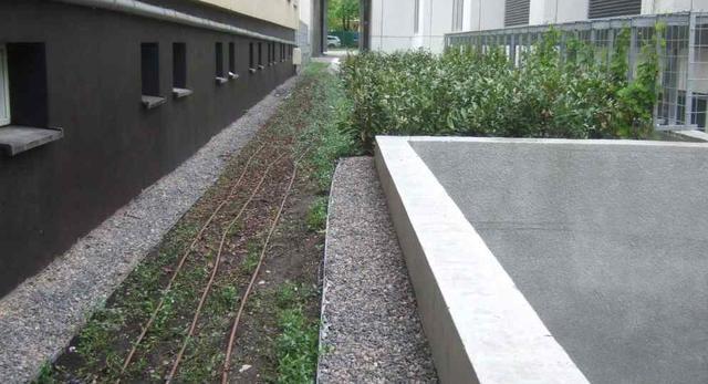 Ogród na dachu - zieleń w budynku ASP w Warszawie na Powiślu
