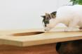 Kot rzeczywiście zainteresowany otworem w stole. Designerski mebel CATable autorstwa Ruan'a Hao z pracowni architektonicznej LYCS  fot. LYCS Architecture