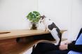 Kot zaciekawiony designerską bryłą stołu CATable  fot. LYCS Architecture