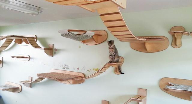 Goldatze; architektura wnętrz dla kotów