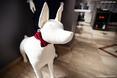 Charakterystyczny element wystroju wnętrza – pies uszyty z materiału i ozdobiony czerwoną kokardą.  Autor: 370Studio