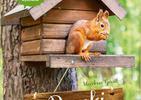 Mały dom w ogrodzie. Dla pszczoły i ryjówki