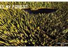 Ekologiczne podejście Listone Giordano do produkcji podłóg