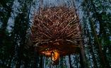 Schronienie w sercu lasu - Tree Hotel