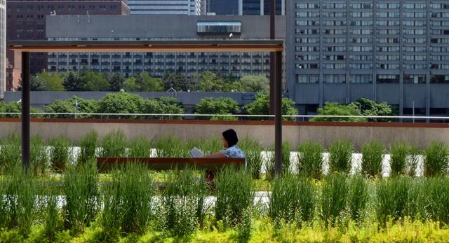 Tęczowe rabaty na dachu - Podium Roof Garden przy Ratuszu w Toronto