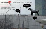 Dobry dizajn: Pies czy Suka Concept Store & Pure Bar