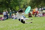 Frisbe - latający talerz