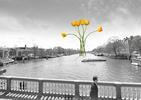 ATRAKCJE HOLANDII. Tulipan i tulipanowy PROJEKT MOSTU dla Amsterdamu