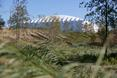 Widok na Basketball Arenę z wtedy jeszcze nie wykończonego Parku Olimpijskiego