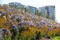 Zadbano także o odpowiednie zagospodarowanie okolic wioski olimpijskiej - nieuporządkowane kwiaty przypominają założenie ogrodu angielskiego