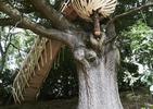Niezwykły domek na drzewie. Inspiracja prosto z natury
