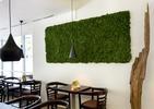 Mech na ścianę. Zobacz zielone ściany we wnętrzach