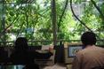 Zieleń uspokaja, dlatego podczas pracy miło mieć taki widok za oknem